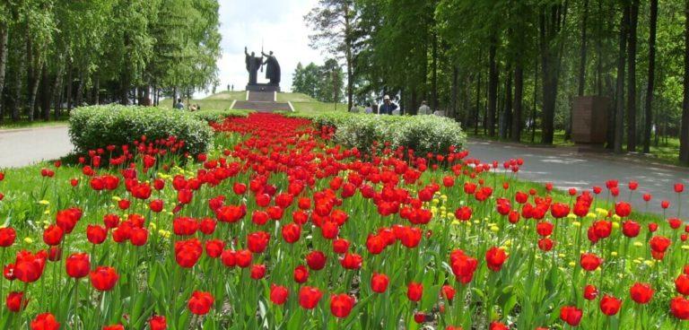Томск лагерный сад фото