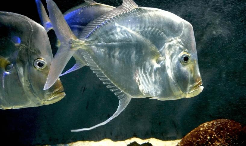 ryba rdfgdf