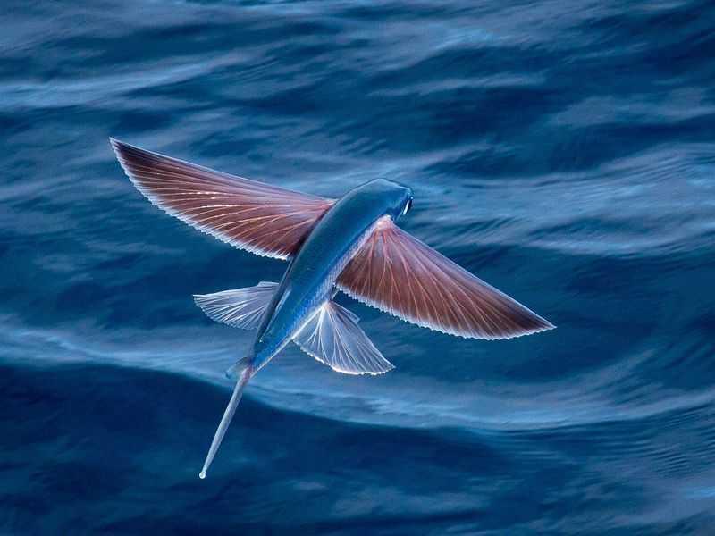 fish ryba