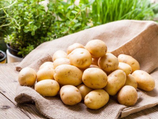 kartochka kartofel