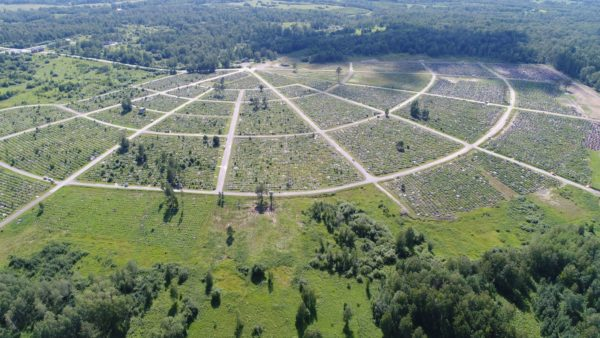 ВОРОНИНО: Поле гладбища в лесу Томска